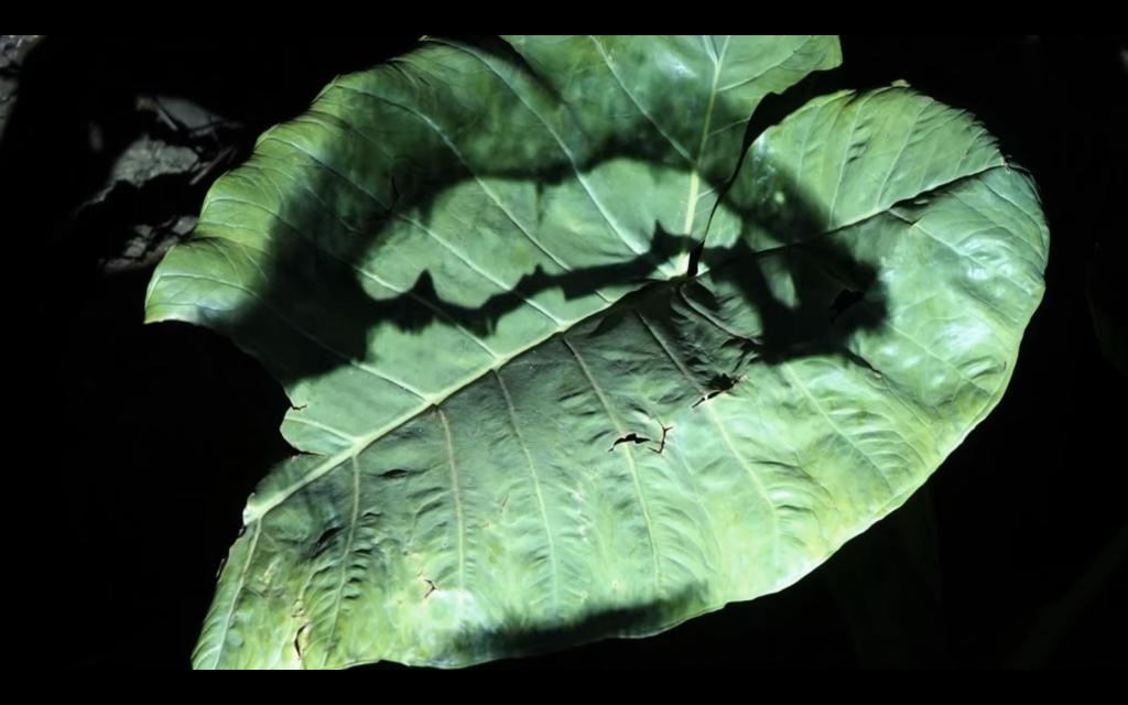 "Chile Easter Island Rapa Nui MAPA Videojournée Landscape Video Art Carlos Silva, Still from ""El paisaje que habla, Rapa Nui"""